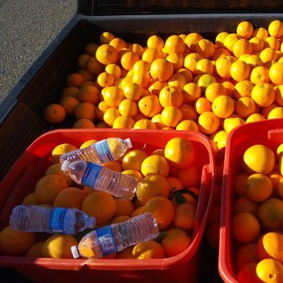 oranges in the truck bed